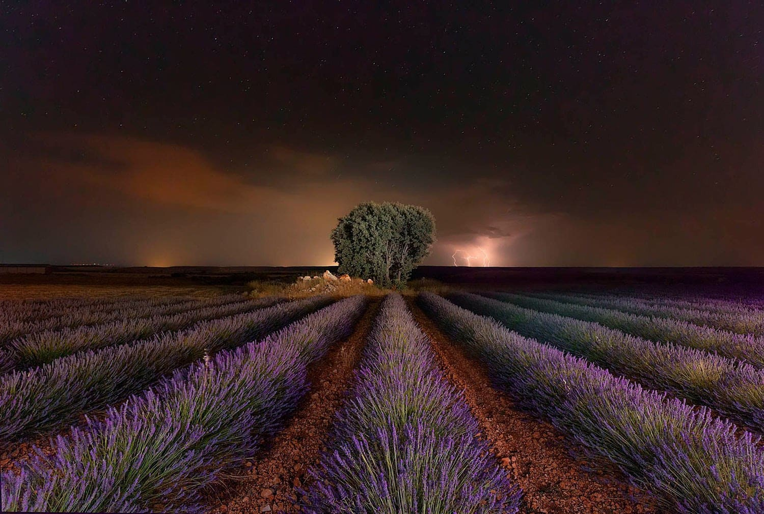 original_05-Lavender-and-Rays-by-Arsenio-G-lvez.jpg
