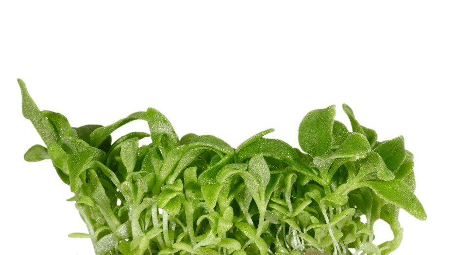 original_Blinq-Cress.jpg