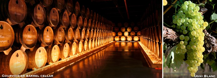 Courvoisier-barrel-cellar-Ugni-Blanc