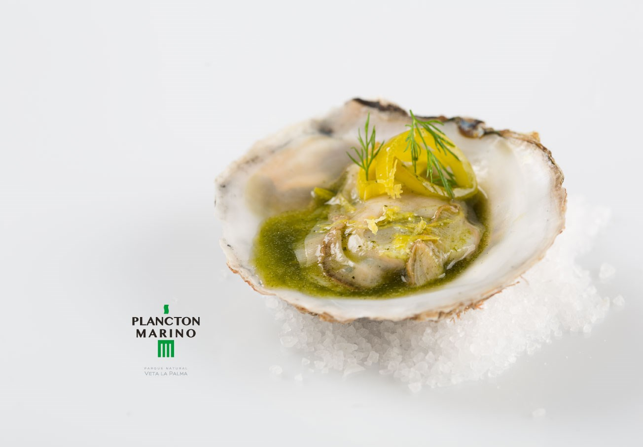 Plancton Oysters