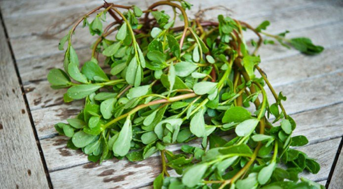 Super Food esotici il purslane