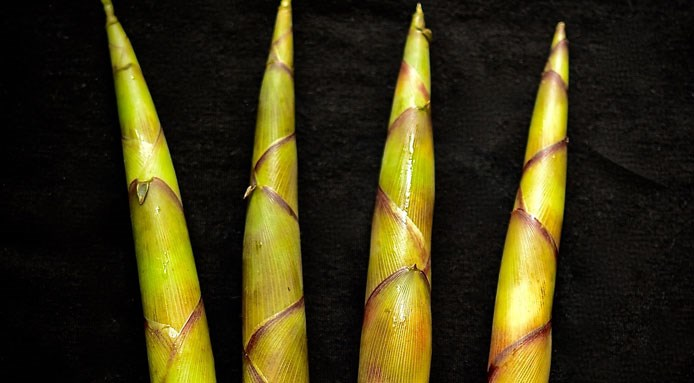 original_bamboo-shoots-finedininglovers.jpg