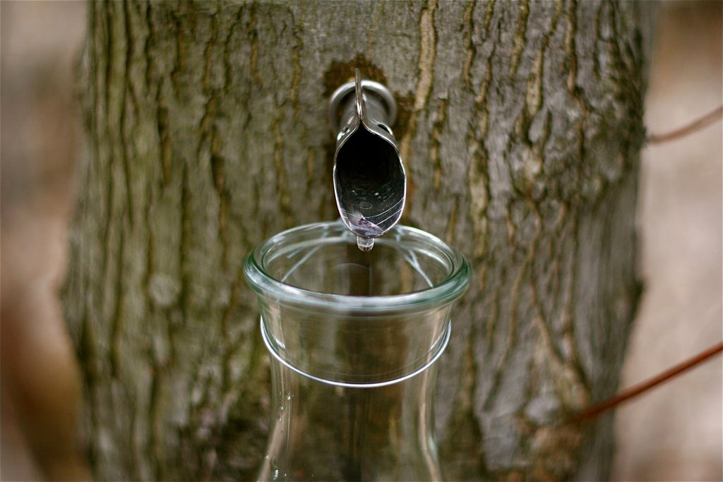 original_maple-water-by-chiots-run-flickr.jpg