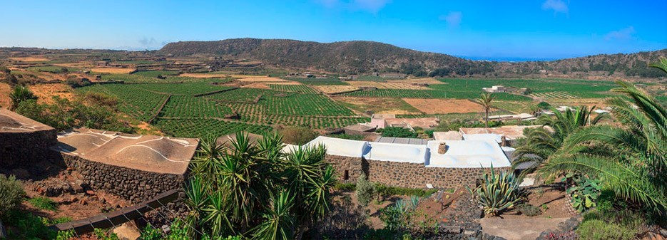 original_Pantelleria-Vineyard