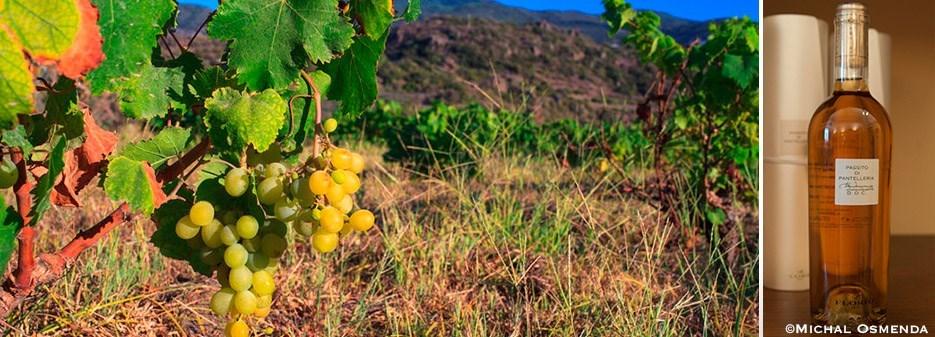 original_Zibibbo-Passito-Pantelleria