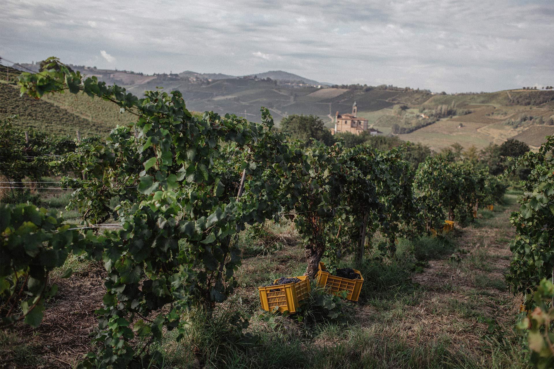 Vigne Cordero