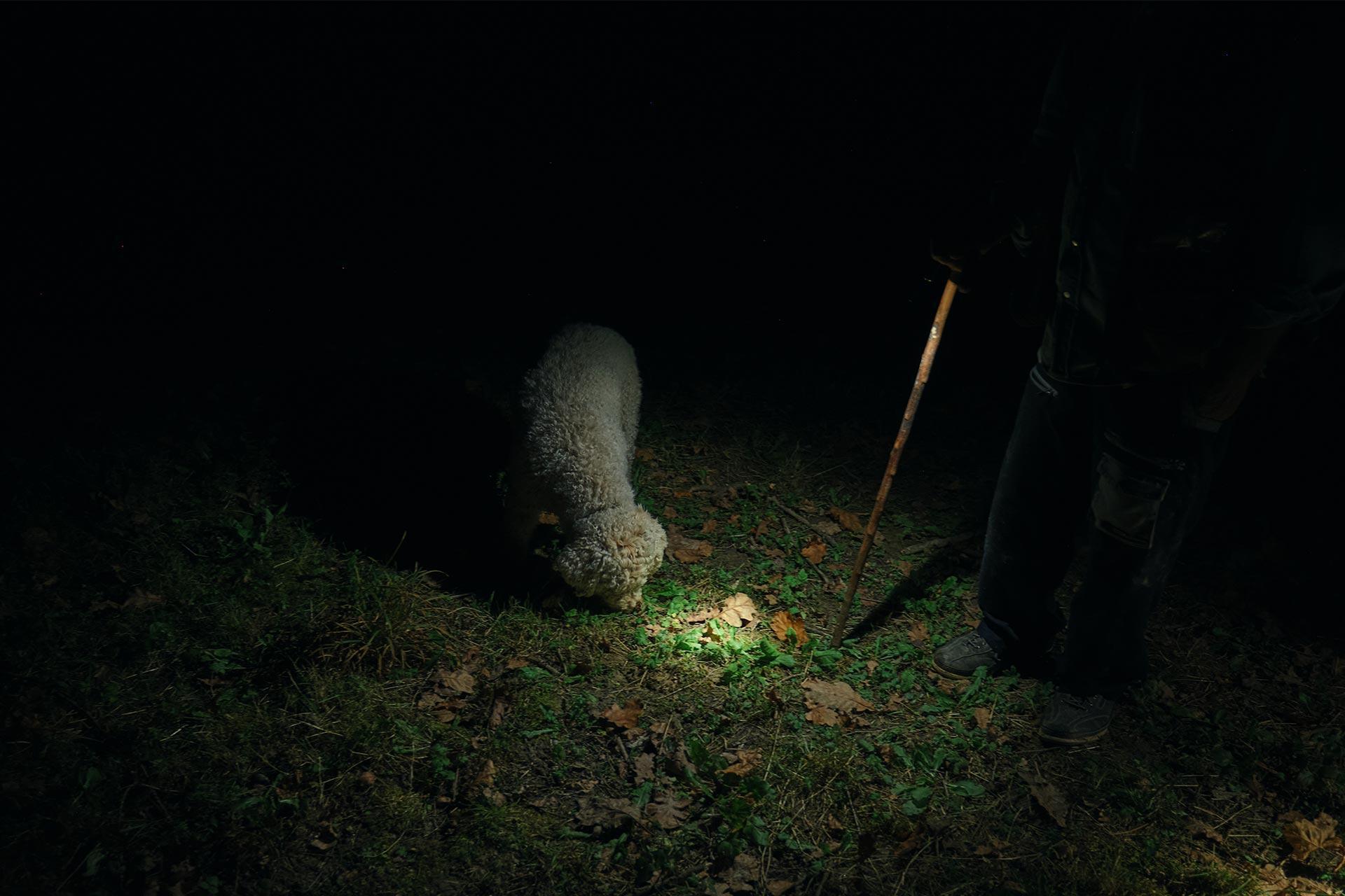 Un cane in cerca di tartufi