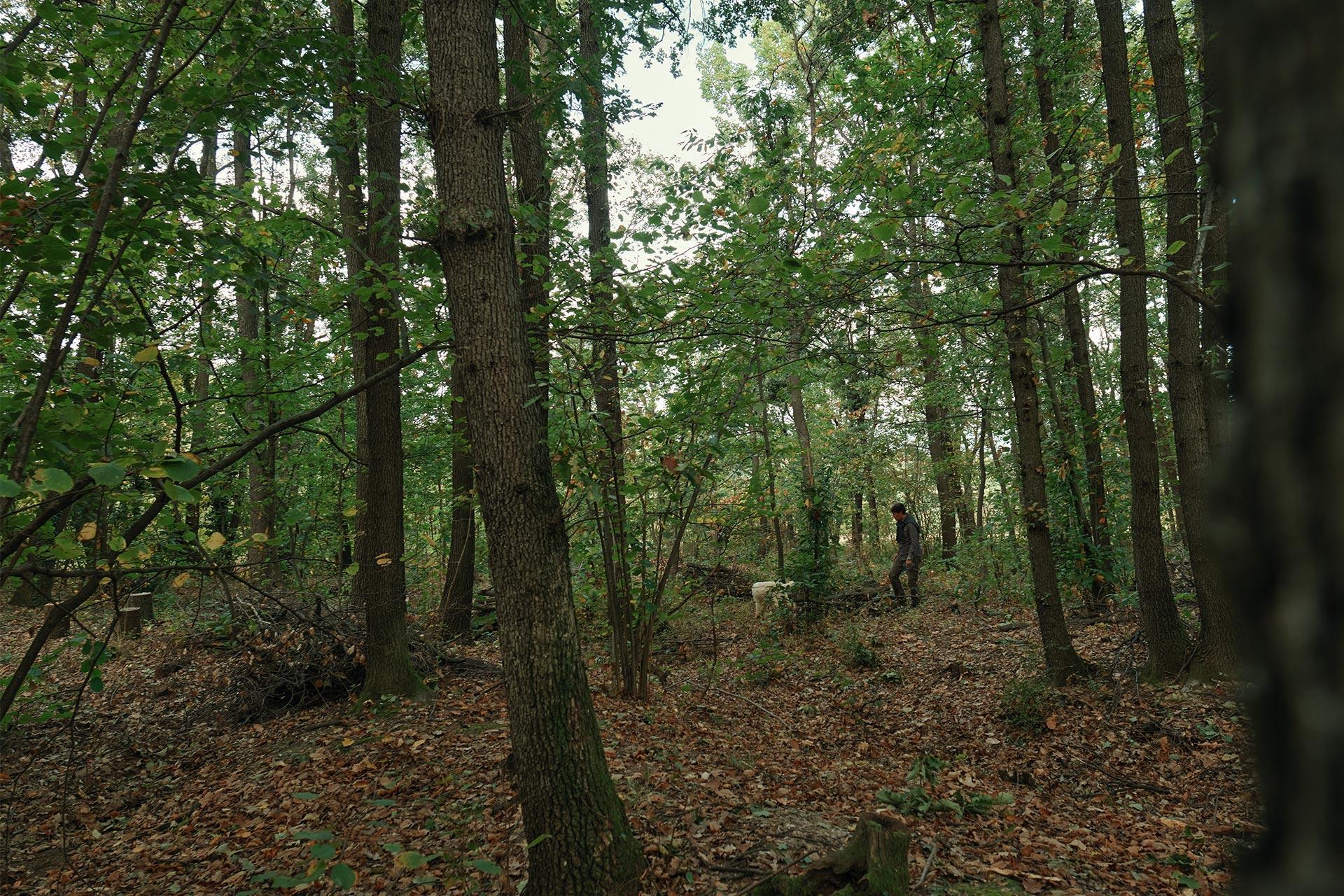 un cacciatore di tartufi e il suo cane nei boschi.