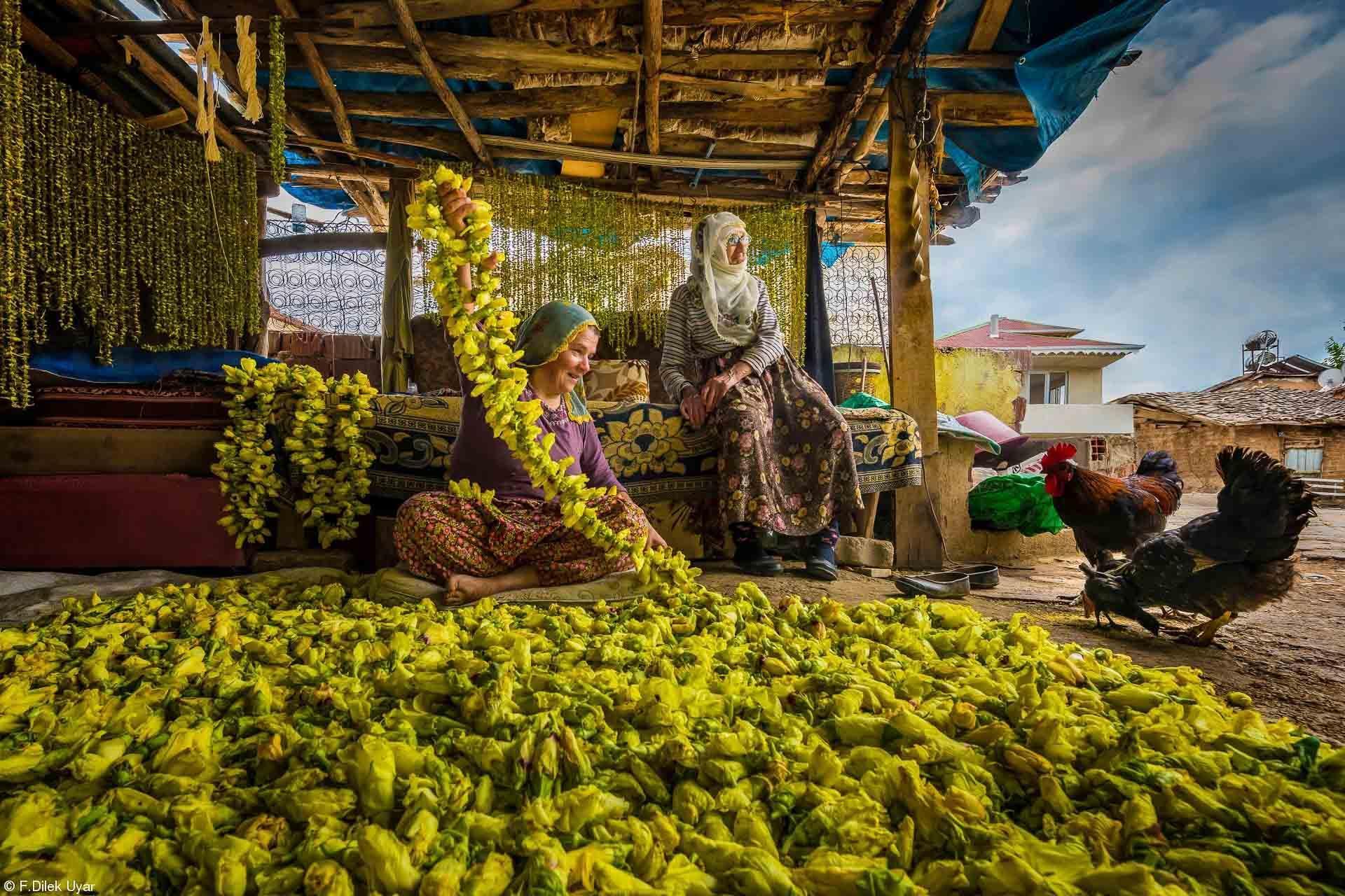 2. Harvest - F.Dilek Uyar Drying Okra