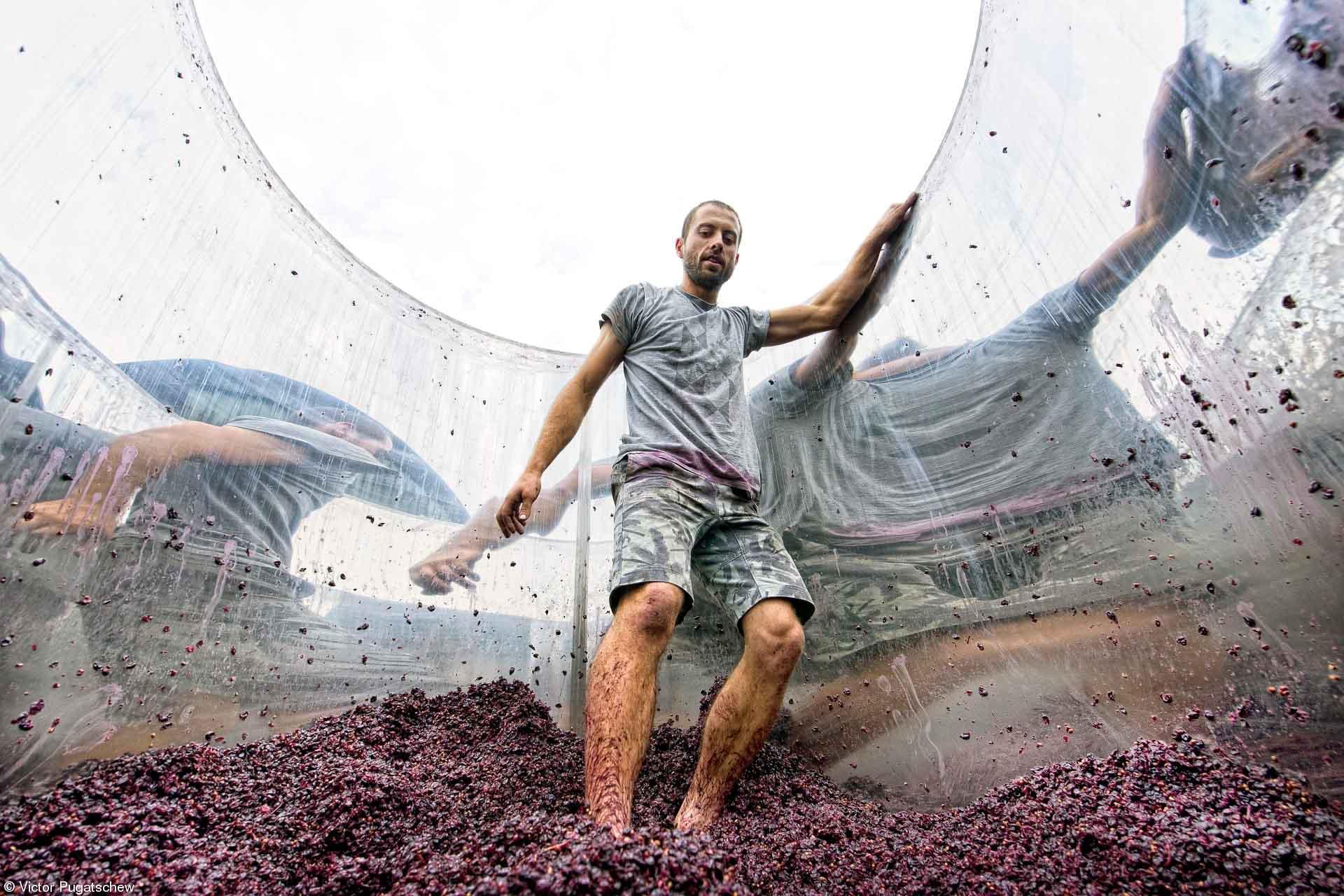 Errazuriz People - Victor Pugatschew -  Pressing the Pinot Noir