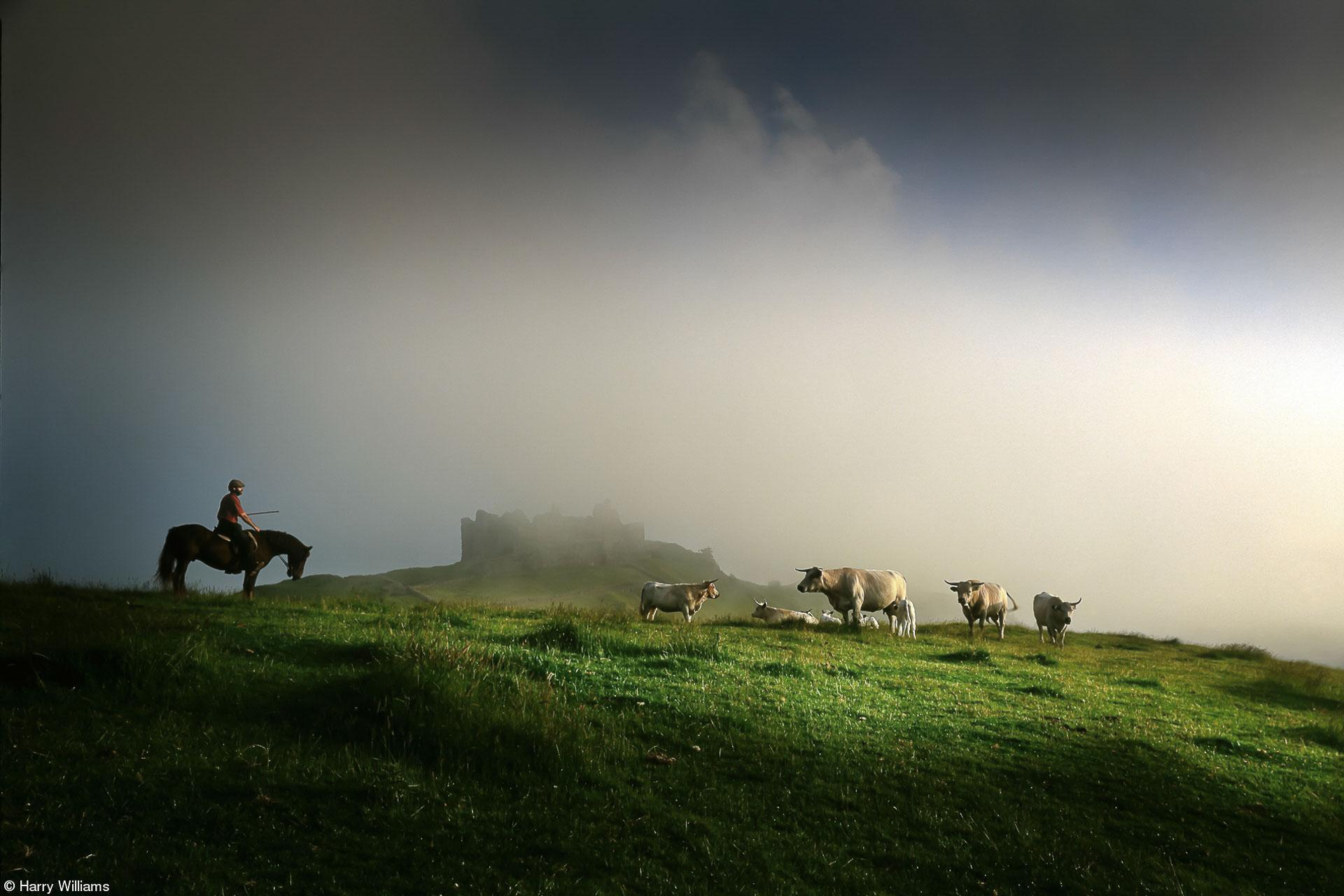 Field - Harry Williams - Farmer with his Longhorn Cattle