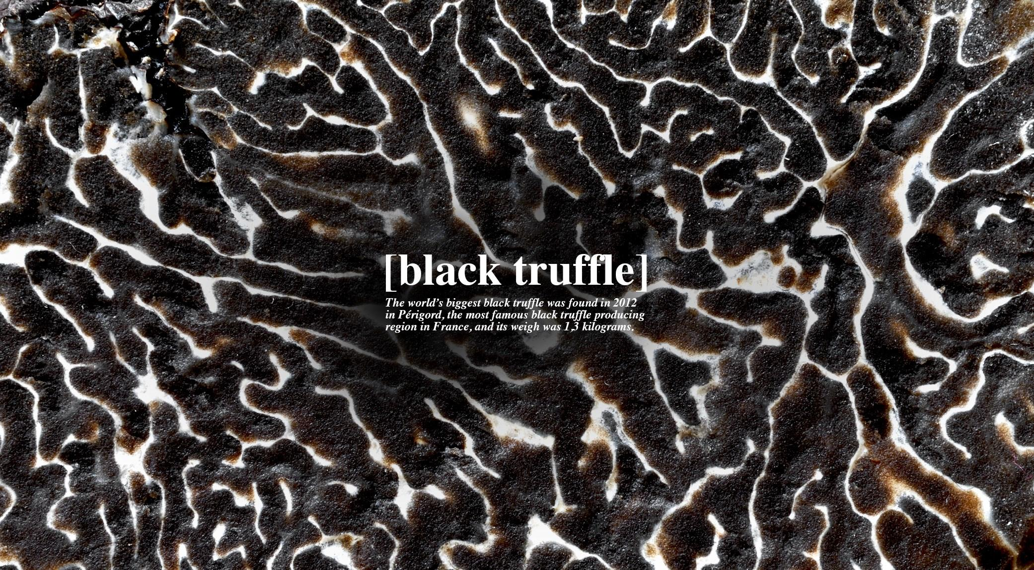 005-black-truffle-finedininglovers