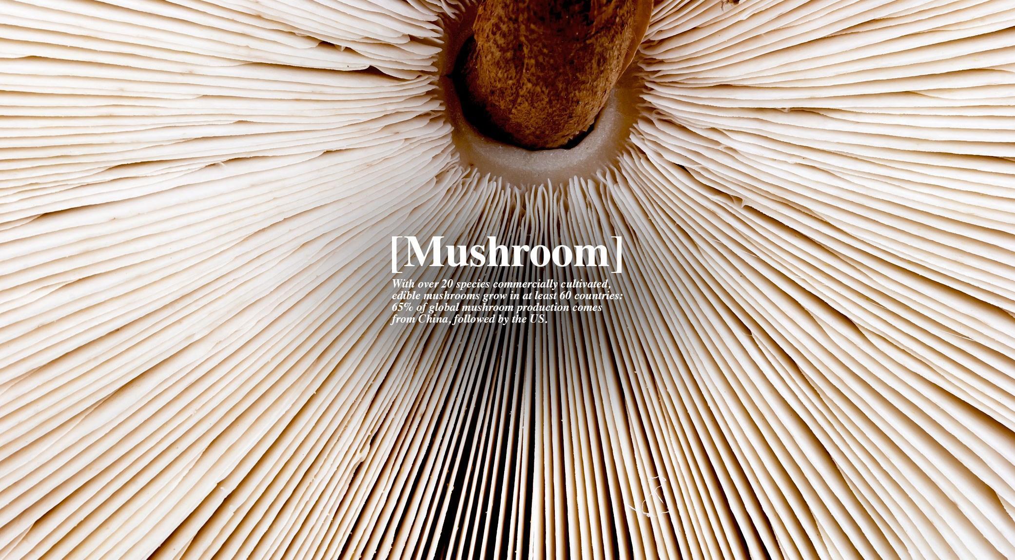 007-mushroom-finedininglovers