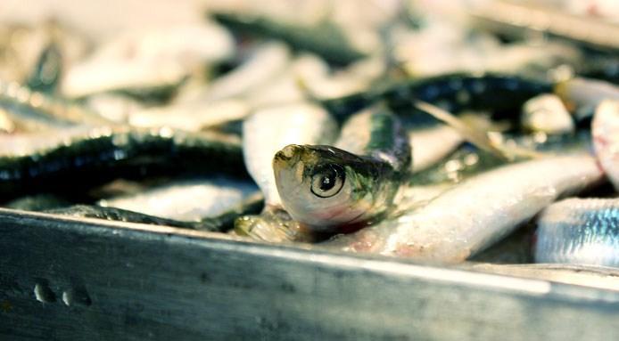 Mercato-del-pesce---Fatemeh