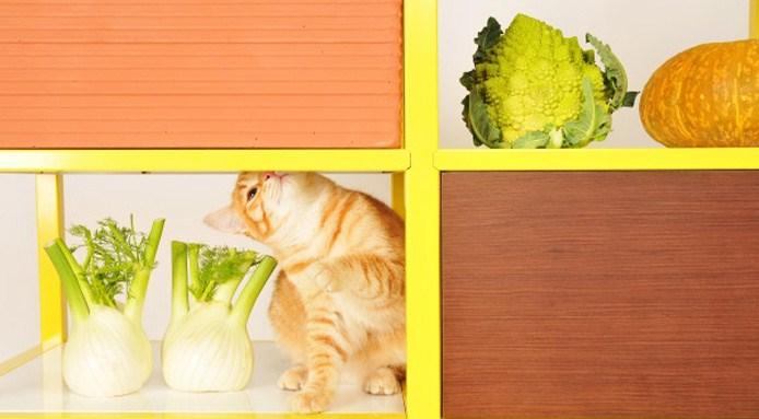 fridayproject-foodstorage3